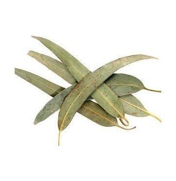 Eucalipto hojas, bandeja 40 gramos