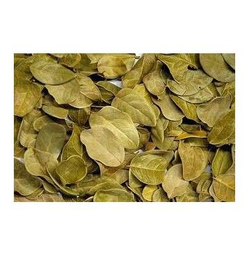 Boldo hojas, bandeja 70 gramos